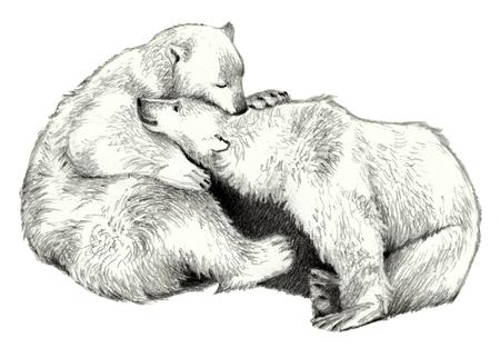 Two cute polar bear. Pencil sketch