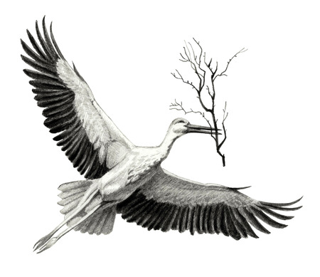 flying stork with a branch in its beak. Pencil sketch of detailed Stock Photo