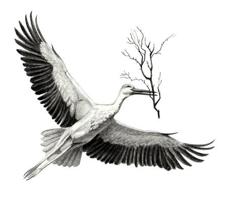 flying stork with a branch in its beak. Pencil sketch of detailed Reklamní fotografie