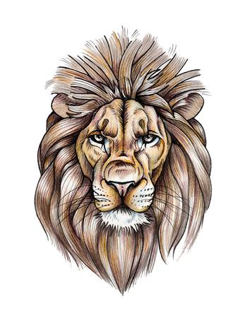 Portrait of a Beautiful Lion. Color pencil drawing Reklamní fotografie