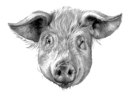 Pig`s head isolated on white background. Pencil drawing, monochrome image Reklamní fotografie - 75014804
