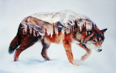 Wolf and forest. Airbrush painting. Hand drawing Reklamní fotografie - 75014809