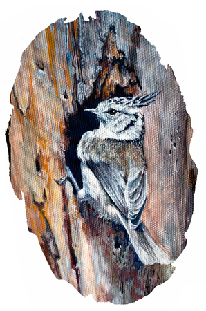 A small crested tit sat on a tree. Painting on canvas. Hand drawing Reklamní fotografie