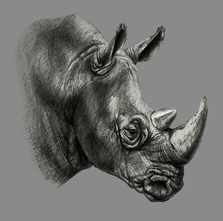 Pencil drawing. rhinos head in profile, isolated on gray background