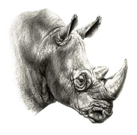 Pencil drawing. rhinos head in profile, isolated on white background
