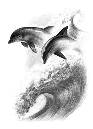 Color Drawing: Two Dolphins On A Wave. Watercolor Pencils Stock ...