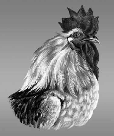 pictorial art: Graphic drawing. Head of rooster in profile on a gray background. Stock Photo