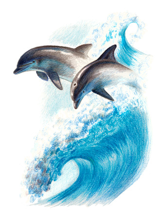 Color drawing: two dolphins on a wave. Watercolor pencils Reklamní fotografie - 75014800
