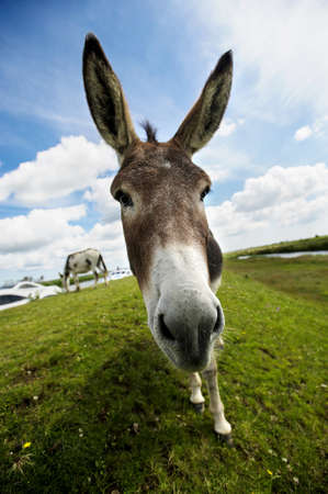 Norfolk Broads, Donkey close up photo