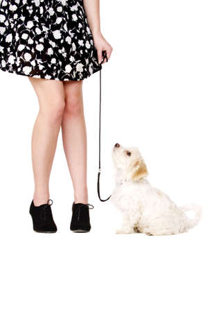 Small white puppy with a black lead sat next to a woman photo