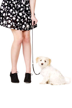 Small white puppy being held with a lead sat next to a woman photo