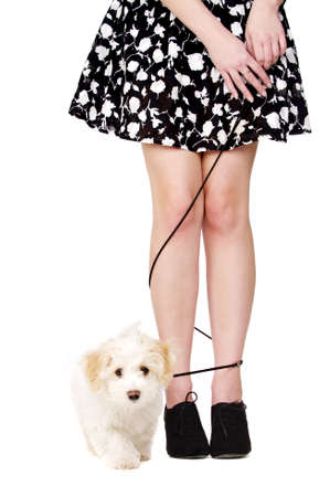 Small white puppy walking with her lead tangled aroung a woman Stock Photo
