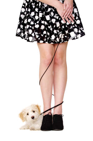 Small white puppy laid with her black lead tangled aroung a woman photo