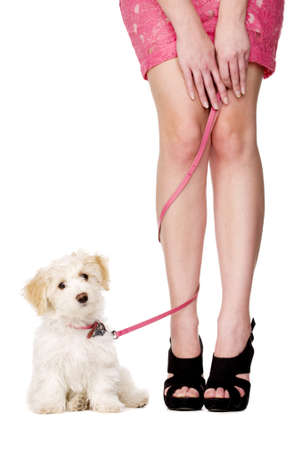 Small white puppy sat with her pink lead tangled aroung a woman Stock Photo