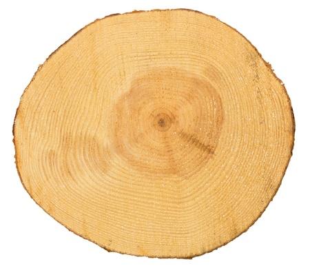 鋸で挽かれた松の木が白い背景で隔離