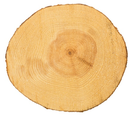 annual ring annual ring: Sawn pine wood isolated on white background