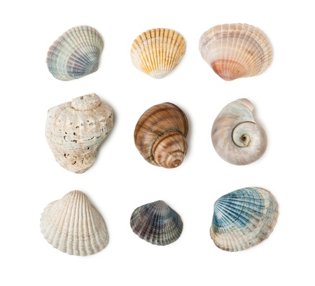 Collection of seashells isolated on white background Stock Photo - 20557620
