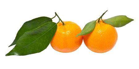 closeup of two tangerine isolated on a white background photo