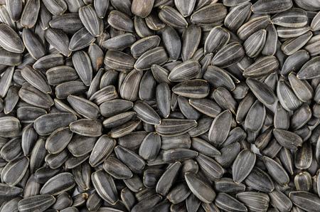 semillas de girasol: Backround de las semillas de girasol tostadas, vista superior