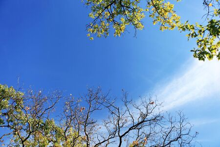 Deep blue autumn sky in Oak Forest Stock Photo