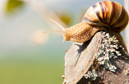Snail climbs to the top of the branches Stock Photo