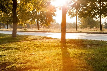 Warm september morning in city park