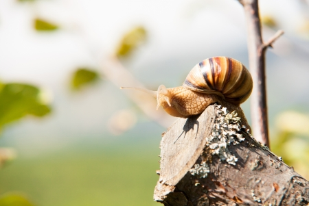 snail climbs to the top of the branches photo