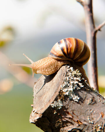 Little Snail climbs to the top of the branches