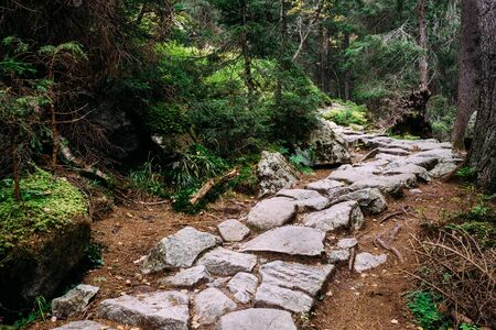 Stone trekking path in Studena dolina, Tatra Mountains, Slovakia.