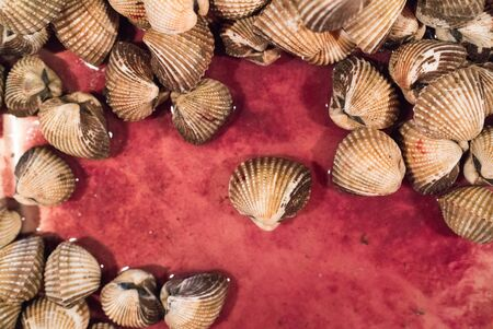 Blood clams on red background. Blood cockles or blood clams (Tegillarca granosa,Cockle or Anadara granosa)