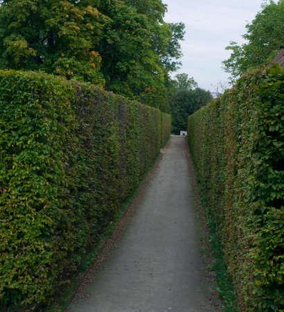 tradional: trees pathway Stock Photo