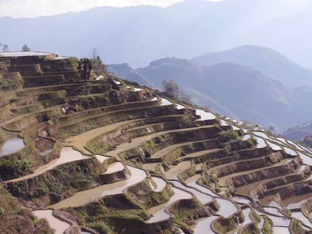 in particular: paddy terraces