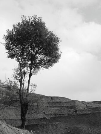 in particular: terraces with tree