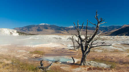 sere: Yellowstone National Park: Mammoth Hot Springs