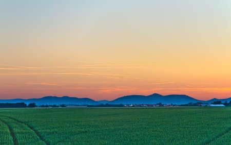 far off: Cornfield at dusk in Pfalz, Germany