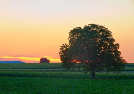 Tree in Pfalz at dusk Stock Photo - 7539885