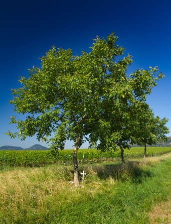 far off: Tree with cross and wineyard in Pfalz, Germany