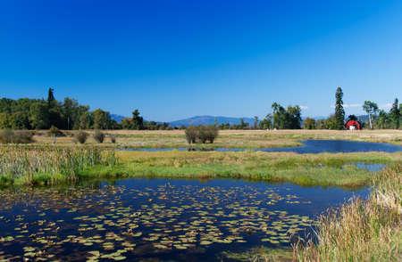 seerosen: Lakeland in Montana