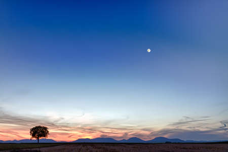 Lonely tree with mountains at dusk, Pfalz, Germany photo