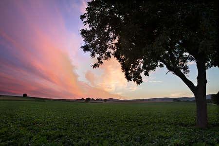 far off: Field with Tree at dusk (violett sky), Pfalz, Germany Stock Photo