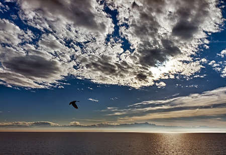 Flying seagull over Lake Constance, Friedrichshafen, Germany photo