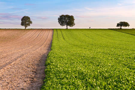 far off: Fields with trees and walker, Pfalz, Germany
