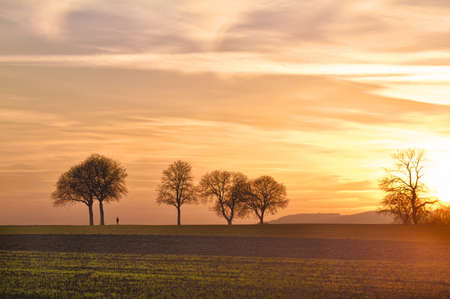 far off: Trees at sunset with walker, Pfalz, Germany
