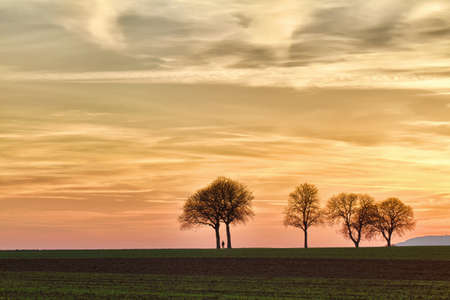 Trees at sunset with walker, Pfalz, Germany photo