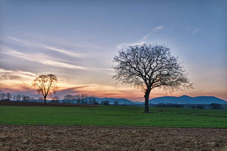 bare trees: Field with Trees at dusk close to Steinweiler, Pfalz, Germany Stock Photo