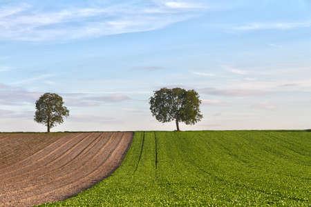 far off: Fields with trees, Pfalz, Germany Stock Photo