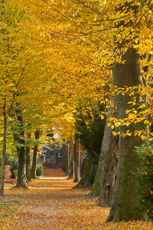 karlsruhe: Park in autumn, Karlsruhe, Germany