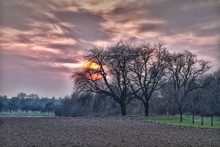 far off: Field and trees at sunset with violet skies, Baden, Germany