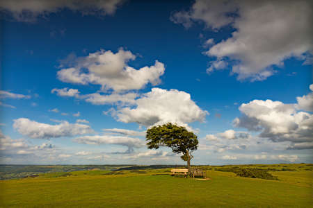 Tree with sun at Cleeve Hill on a windy day, Cotswolds, England
