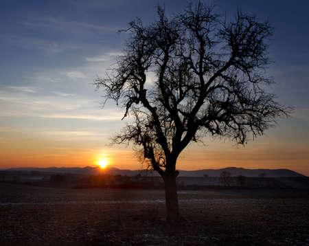 far off: Single tree at sunset, Pfalz, Germany Stock Photo